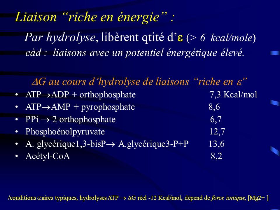 Potentiel doxydoréduction: Très fréquentes/cellules vivantes : espèces moléculaires peuvent gagner ou perdre réversiblement des e - –Oxydation = perte d électrons –Réduction = gain d électrons («redox») Système d oxydoréduction («redox») se représente : OX + ne - ---> RED OX + ne - ---> RED Aucune subst.