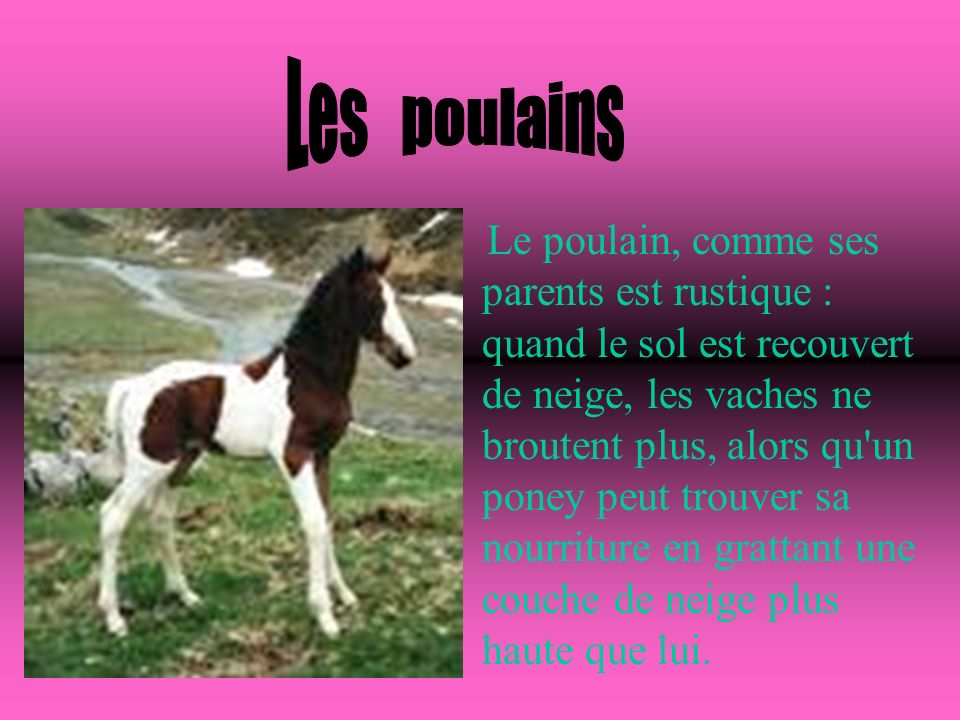 Le Cheval L'histoire du cheval et son évolution Le cheval est fier, ardent et impétueux, disait le naturaliste Georges Buffon. Symbole de puissance et