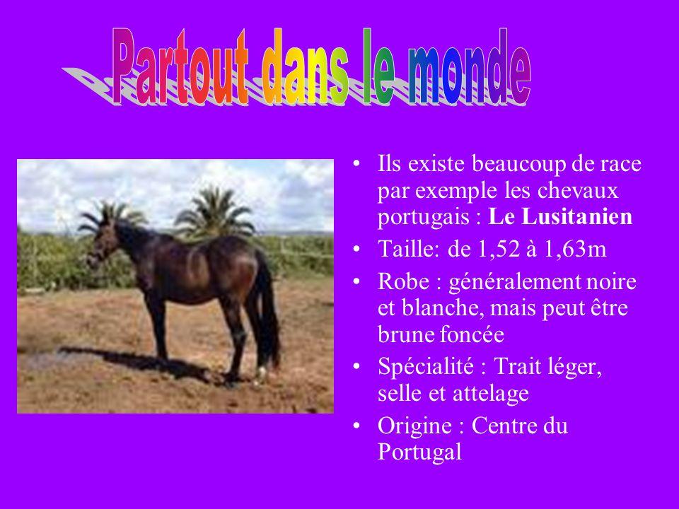 Ils existe beaucoup de race par exemple les chevaux portugais : Le Lusitanien Taille: de 1,52 à 1,63m Robe : généralement noire et blanche, mais peut être brune foncée Spécialité : Trait léger, selle et attelage Origine : Centre du Portugal