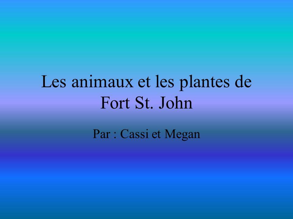 Les animaux et les plantes de Fort St. John Par : Cassi et Megan