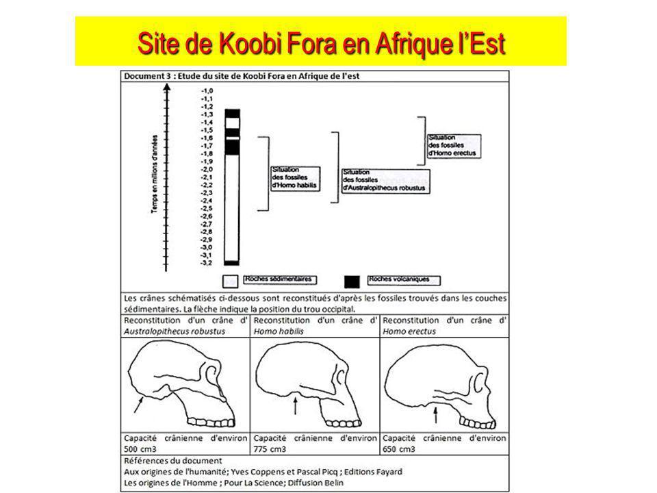 Site de Koobi Fora en Afrique lEst