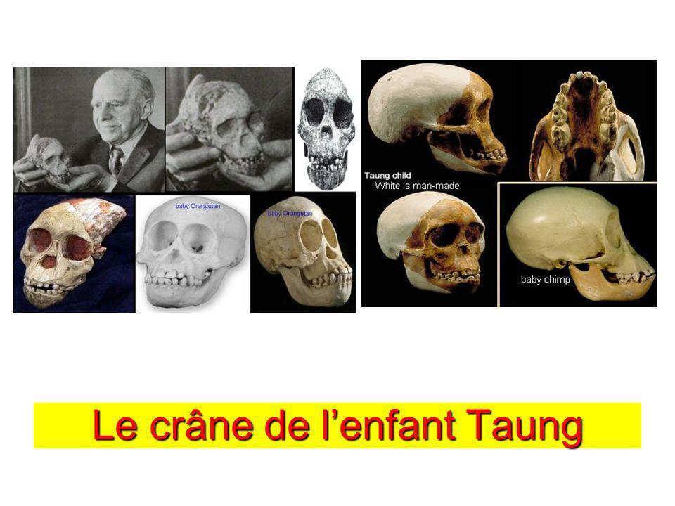 Le crâne de lenfant Taung