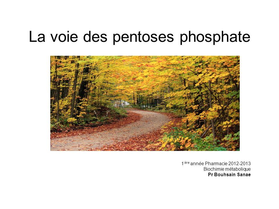 La voie des pentoses phosphate 1 ière année Pharmacie 2012-2013 Biochimie métabolique Pr Bouhsain Sanae