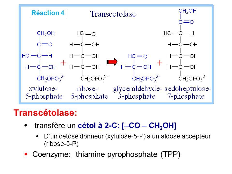Transcétolase: transfère un cétol à 2-C: [–CO – CH 2 OH] Dun cétose donneur (xylulose-5-P) à un aldose accepteur (ribose-5-P) Coenzyme: thiamine pyrop