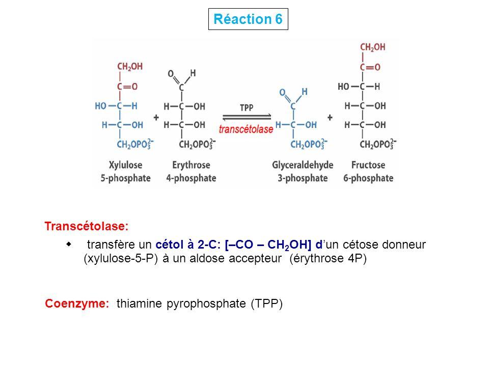 Transcétolase: transfère un cétol à 2-C: [–CO – CH 2 OH] dun cétose donneur (xylulose-5-P) à un aldose accepteur (érythrose 4P) Réaction 6 Coenzyme: t