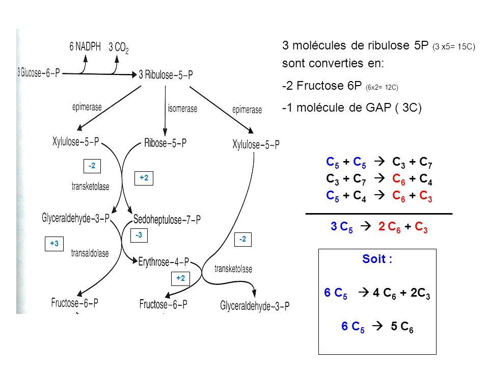 3 molécules de ribulose 5P (3 x5= 15C) sont converties en: -2 Fructose 6P (6x2= 12C) -1 molécule de GAP ( 3C) C 5 + C 5 C 3 + C 7 C 3 + C 7 C 6 + C 4