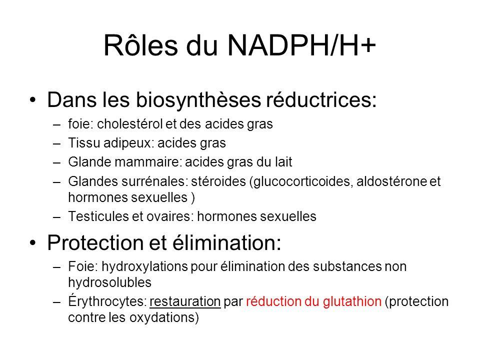 Rôles du NADPH/H+ Dans les biosynthèses réductrices: –foie: cholestérol et des acides gras –Tissu adipeux: acides gras –Glande mammaire: acides gras d