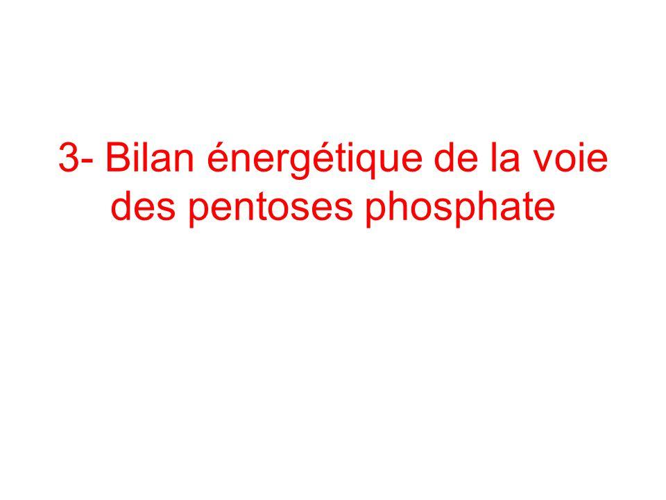 3- Bilan énergétique de la voie des pentoses phosphate