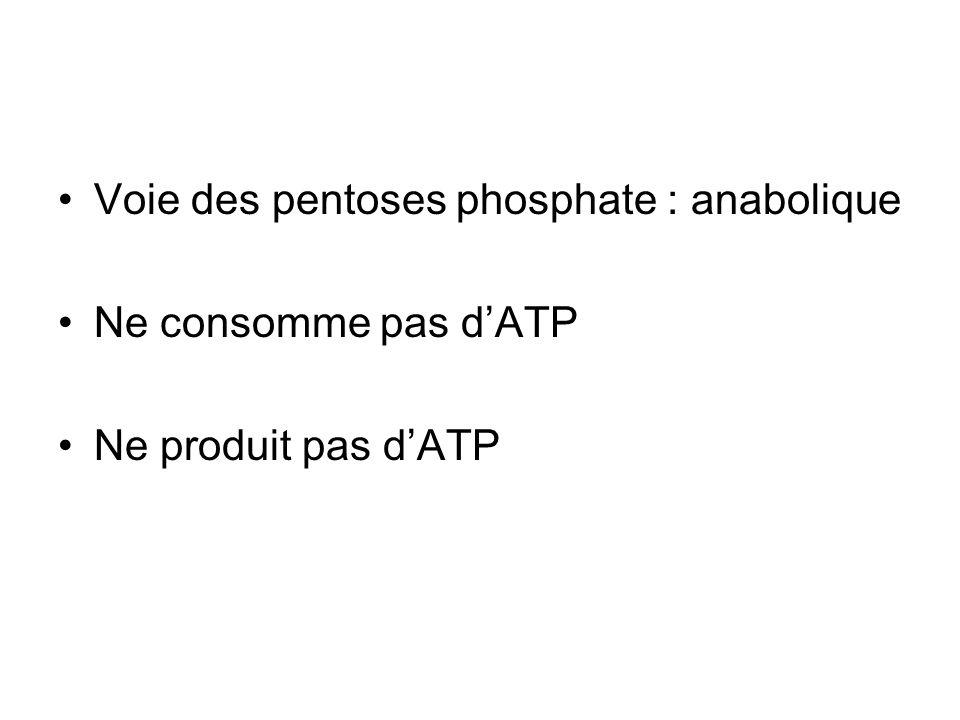 Voie des pentoses phosphate : anabolique Ne consomme pas dATP Ne produit pas dATP