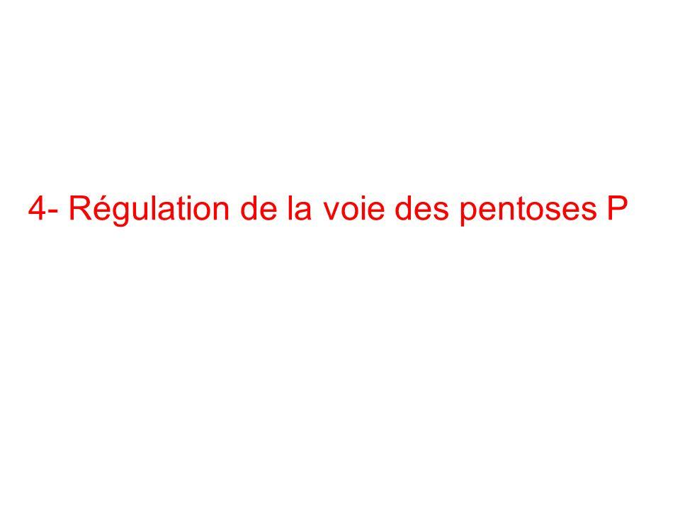 4- Régulation de la voie des pentoses P