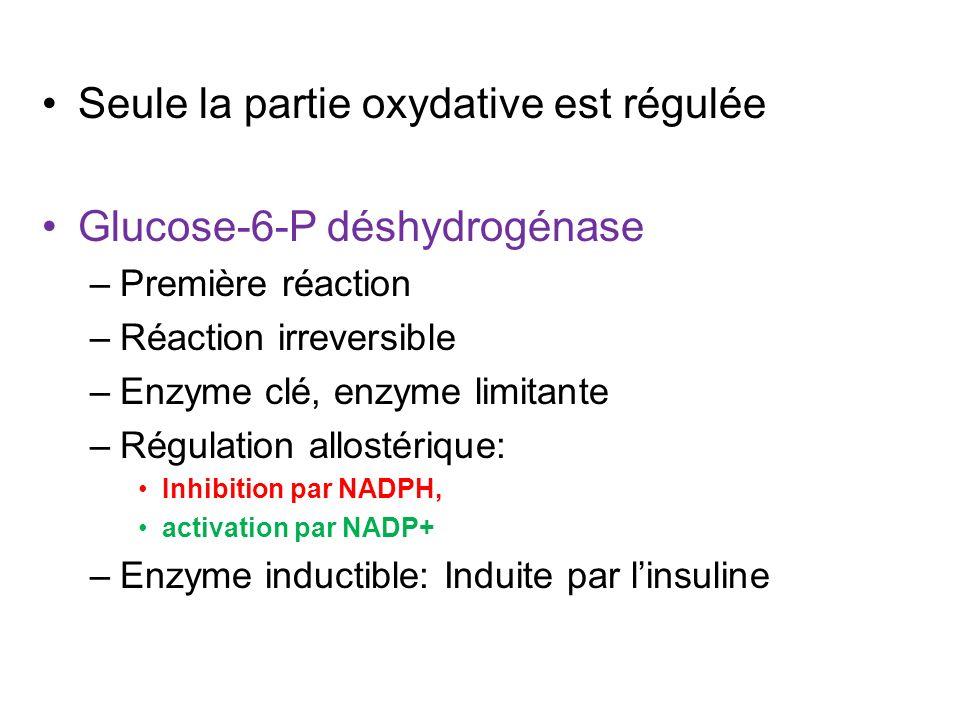 Seule la partie oxydative est régulée Glucose-6-P déshydrogénase –Première réaction –Réaction irreversible –Enzyme clé, enzyme limitante –Régulation a