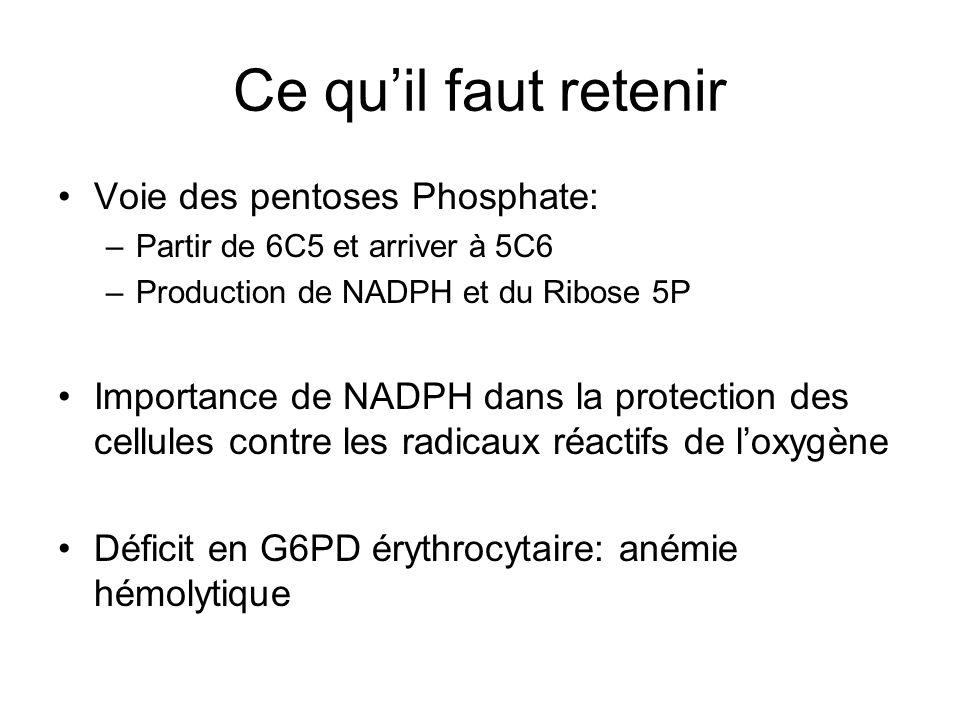 Ce quil faut retenir Voie des pentoses Phosphate: –Partir de 6C5 et arriver à 5C6 –Production de NADPH et du Ribose 5P Importance de NADPH dans la pro