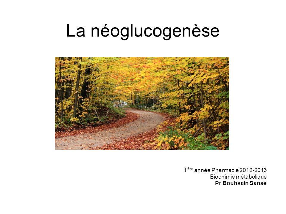 La néoglucogenèse 1 ière année Pharmacie 2012-2013 Biochimie métabolique Pr Bouhsain Sanae