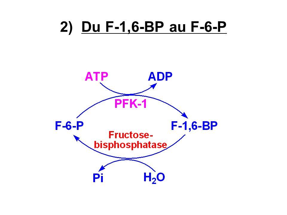 2) Du F-1,6-BP au F-6-P