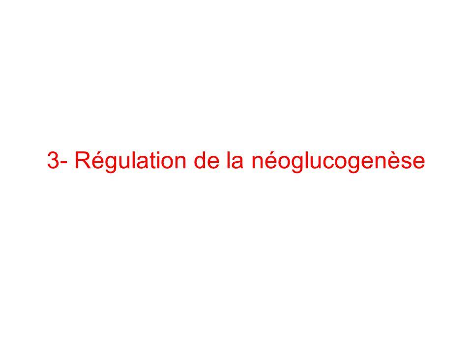 3- Régulation de la néoglucogenèse