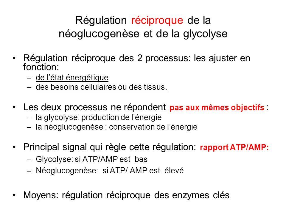 Régulation réciproque de la néoglucogenèse et de la glycolyse Régulation réciproque des 2 processus: les ajuster en fonction: –de létat énergétique –d