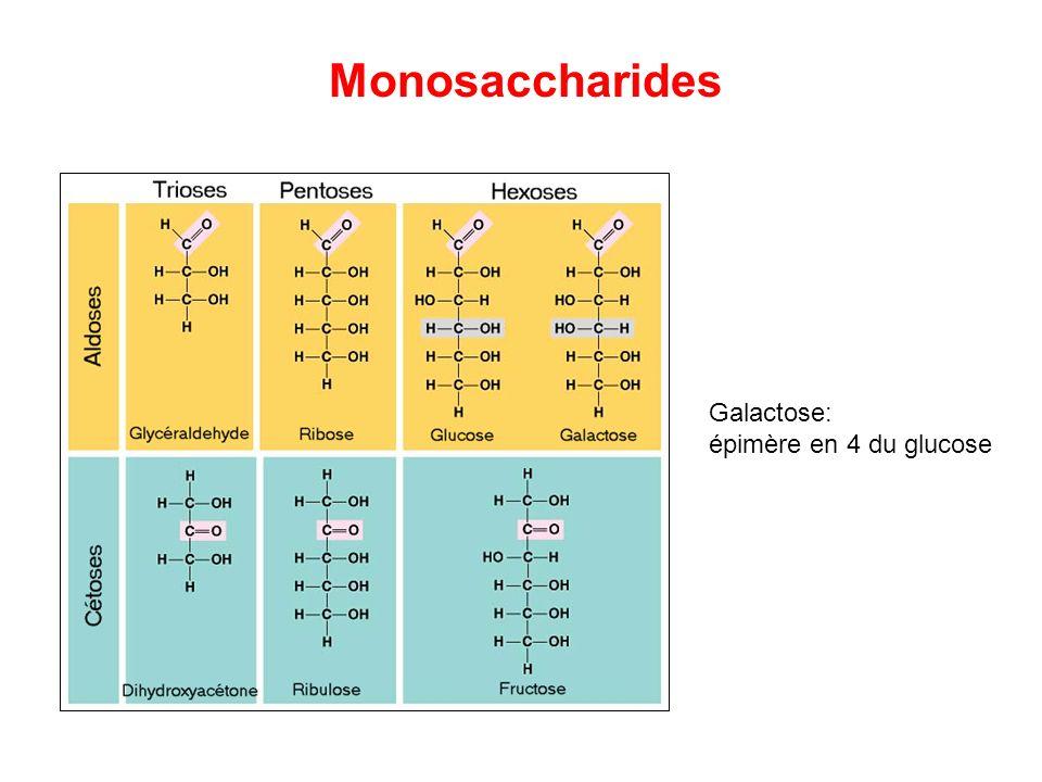 Monosaccharides Galactose: épimère en 4 du glucose