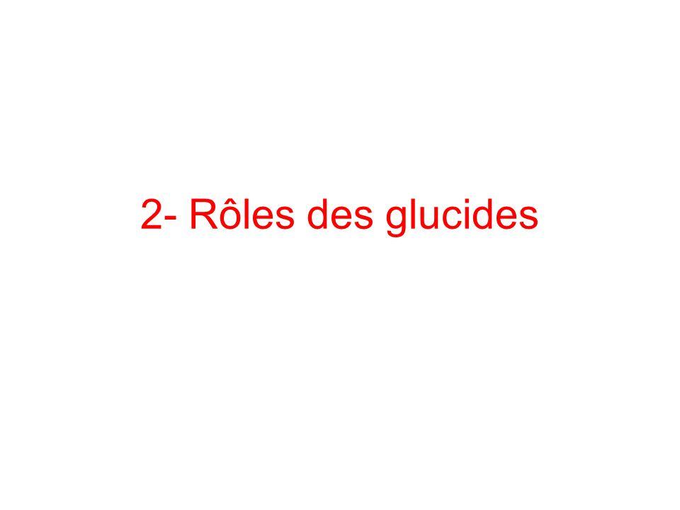 2- Rôles des glucides