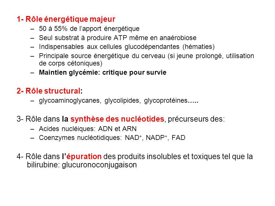 1- Rôle énergétique majeur –50 à 55% de lapport énergétique –Seul substrat à produire ATP même en anaérobiose –Indispensables aux cellules glucodépend