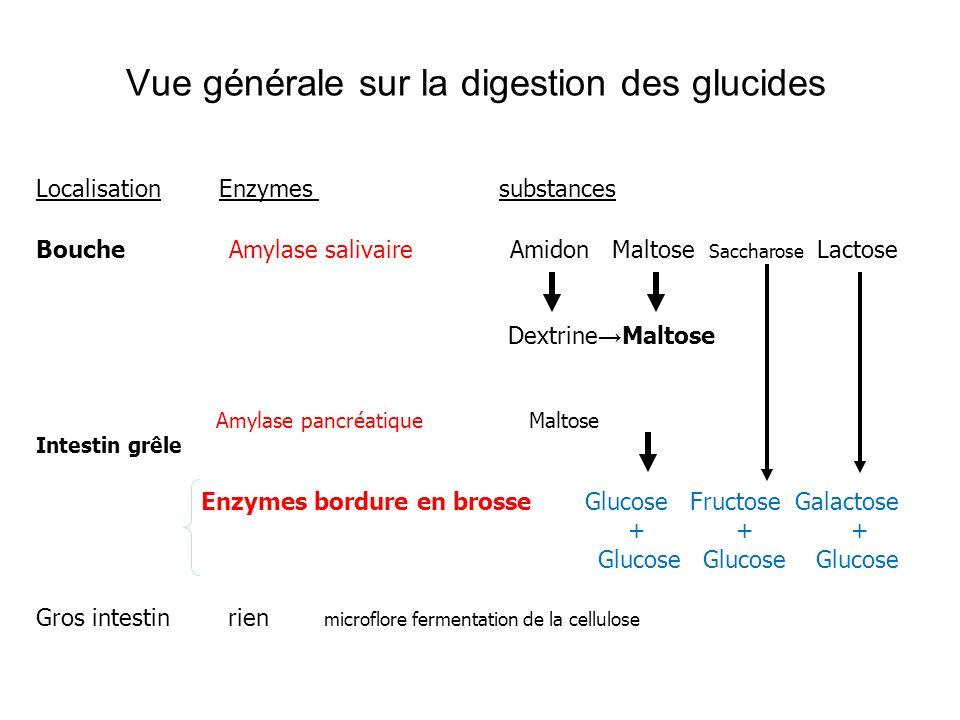 Localisation Enzymes substances Bouche Amylase salivaire Amidon Maltose Saccharose Lactose Dextrine Maltose Amylase pancréatique Maltose Intestin grêl