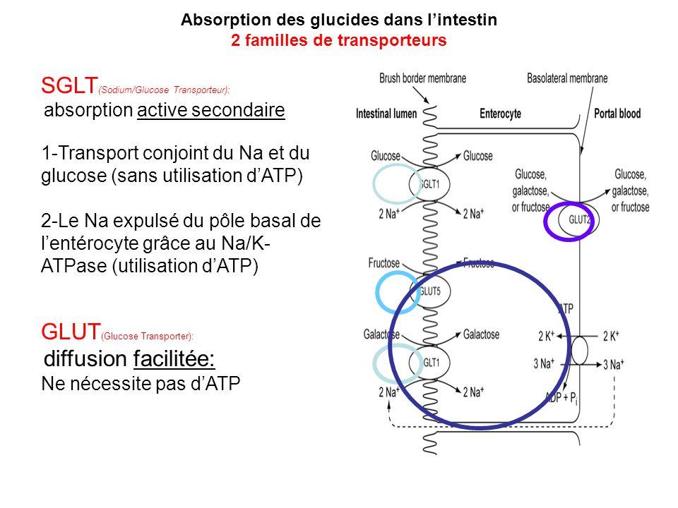 SGLT (Sodium/Glucose Transporteur): absorption active secondaire 1-Transport conjoint du Na et du glucose (sans utilisation dATP) 2-Le Na expulsé du p