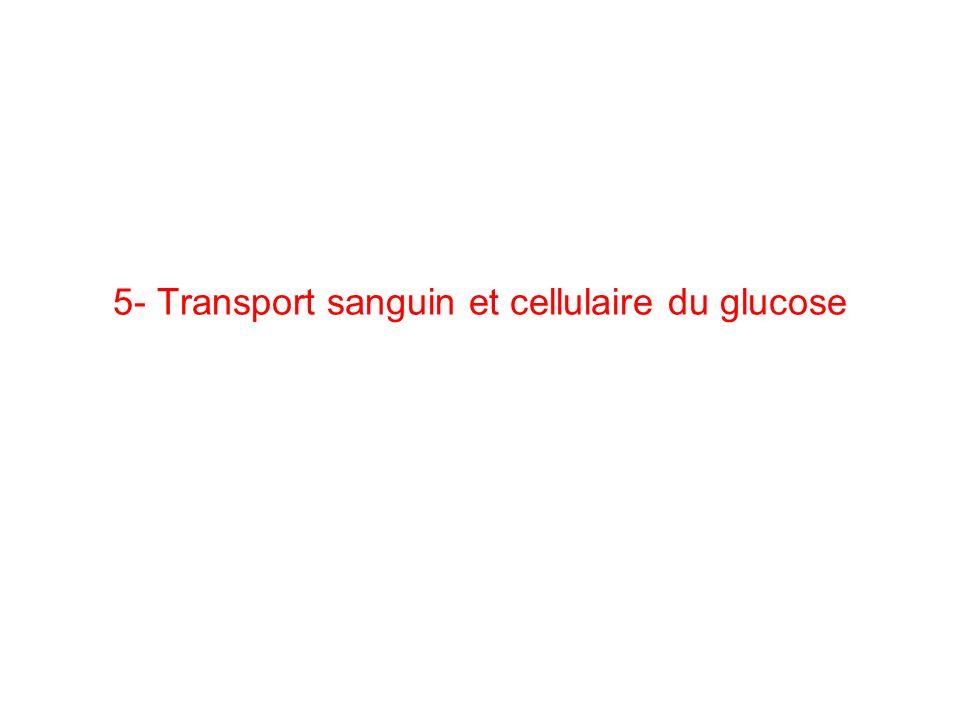 5- Transport sanguin et cellulaire du glucose