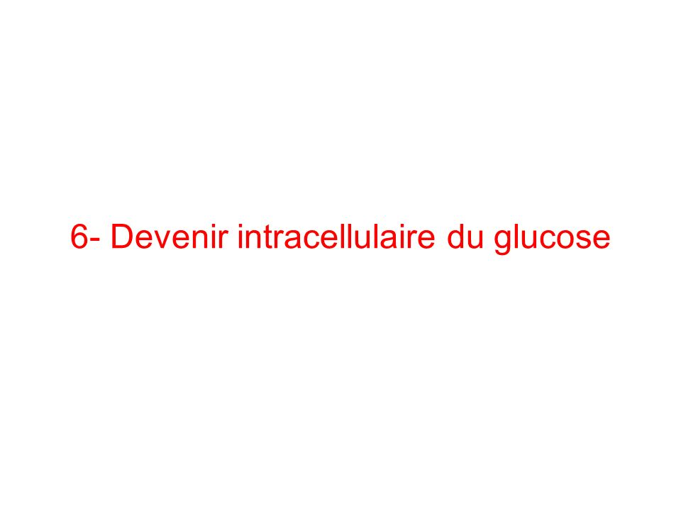 6- Devenir intracellulaire du glucose