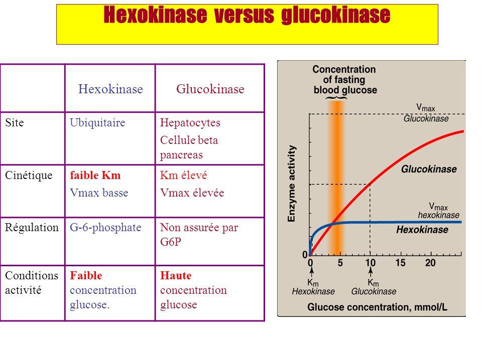 Hexokinase versus glucokinase HexokinaseGlucokinase SiteUbiquitaireHepatocytes Cellule beta pancreas Cinétiquefaible Km Vmax basse Km élevé Vmax élevé