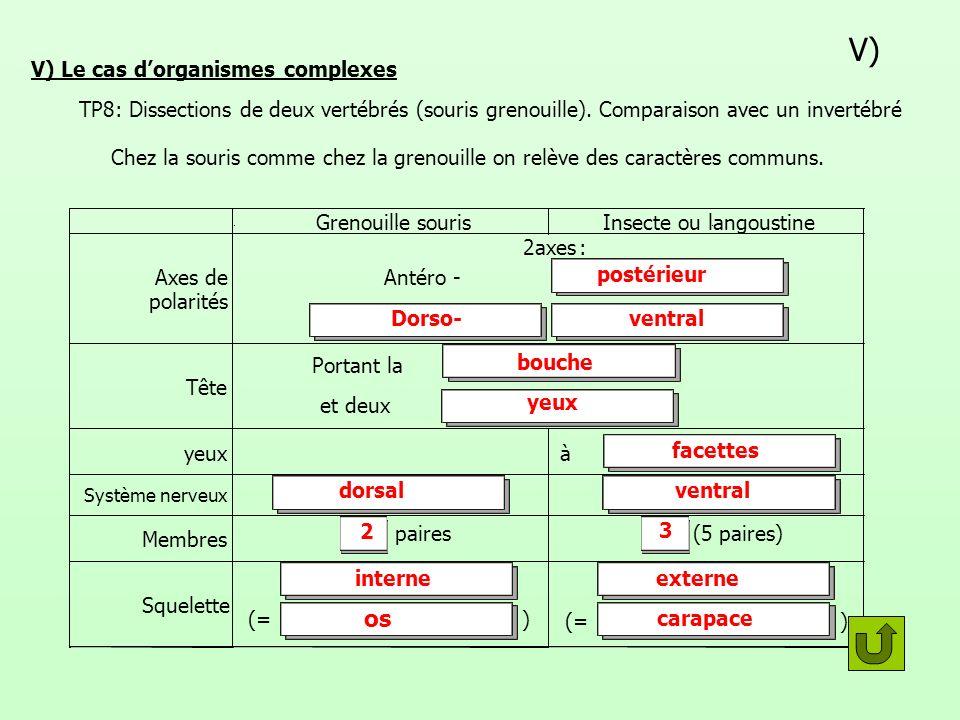 V) V) Le cas dorganismes complexes TP8: Dissections de deux vertébrés (souris grenouille). Comparaison avec un invertébré Chez la souris comme chez la
