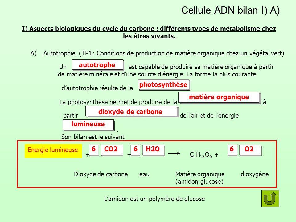 Cellule ADN bilan I) A) I) Aspects biologiques du cycle du carbone : différents types de métabolisme chez les êtres vivants. A) Autotrophie.(TP1 : Con
