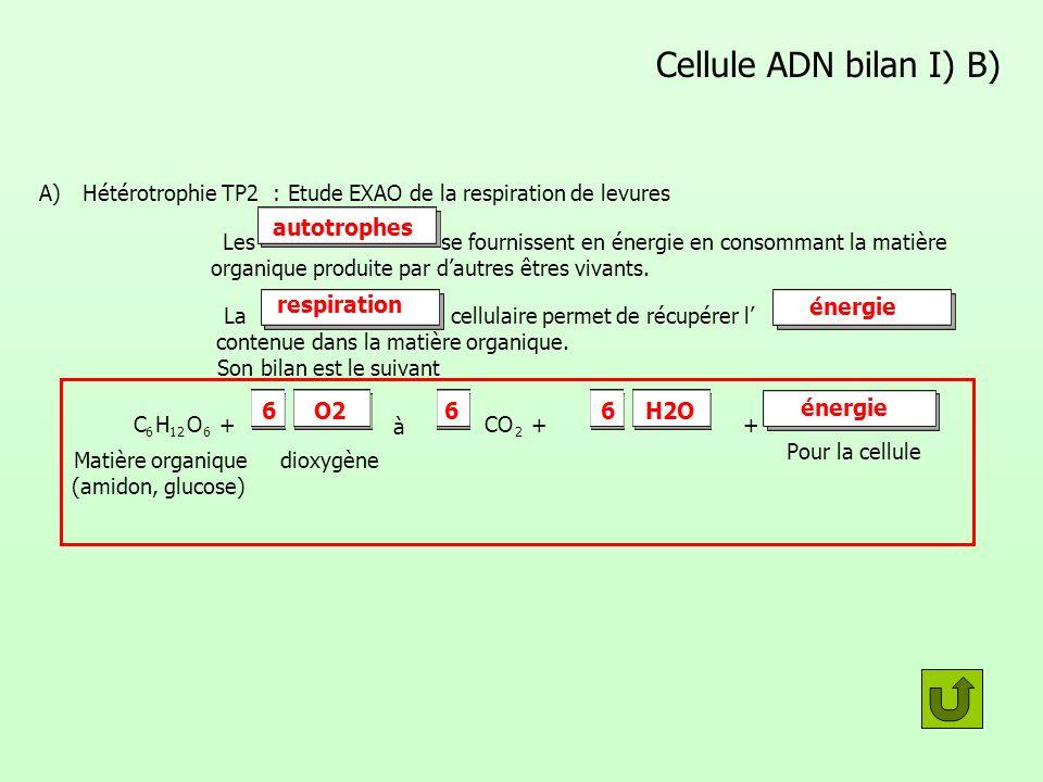 Cellule ADN bilan I) B) A) Hétérotrophie TP2 : Etude EXAO de la respiration de levures Les se fournissent en énergie en consommant la matière organiqu