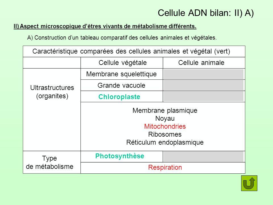 Cellule ADN bilan: II) A) II) Aspect microscopique dêtres vivants de métabolisme différents. A) Construction dun tableau comparatif des cellules anima
