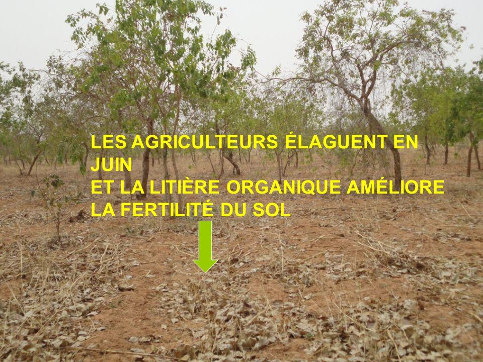 LES AGRICULTEURS ÉLAGUENT EN JUIN ET LA LITIÈRE ORGANIQUE AMÉLIORE LA FERTILITÉ DU SOL
