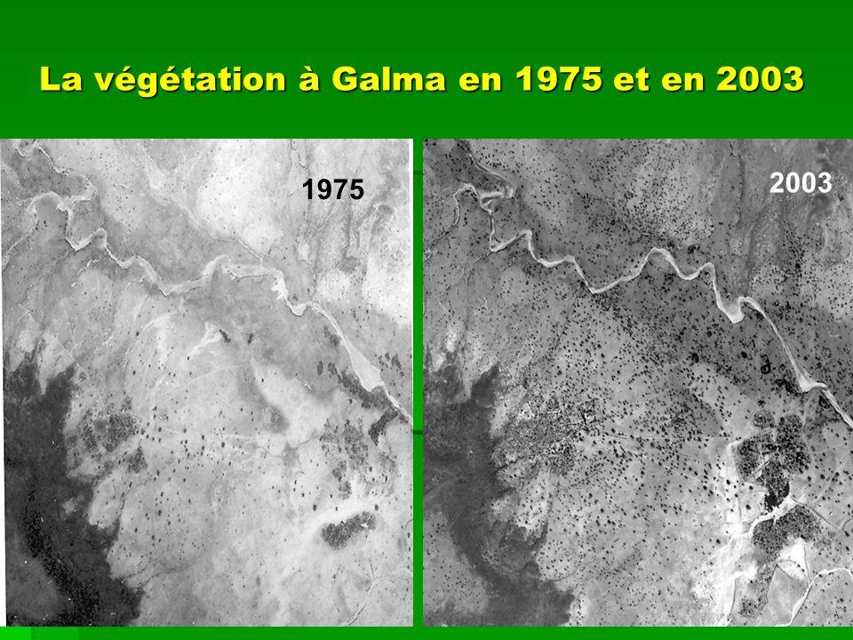 La végétation à Galma en 1975 et en 2003 1975 2003