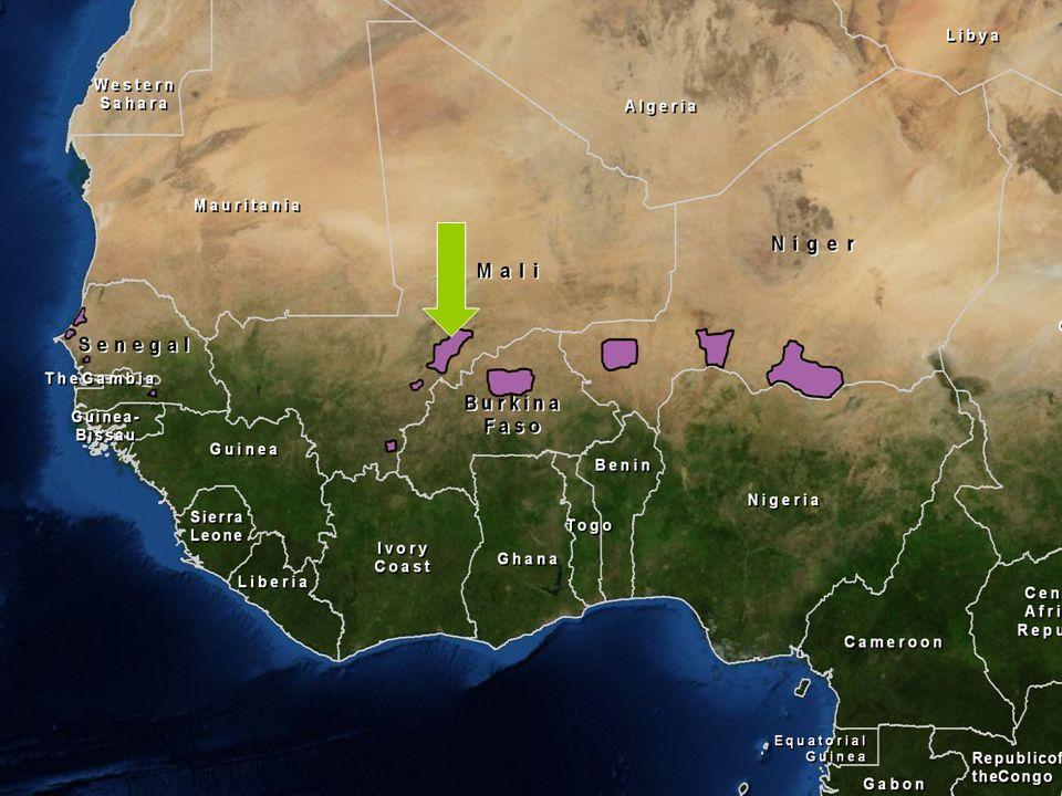 NOUVELLES AGROFORÊTS SUR LES PLAINES DU SÉNO AU MALI (450.000 ha) EXCÉDENT CÉRÉALIER EN 2011 : environ 50.000 tonnes