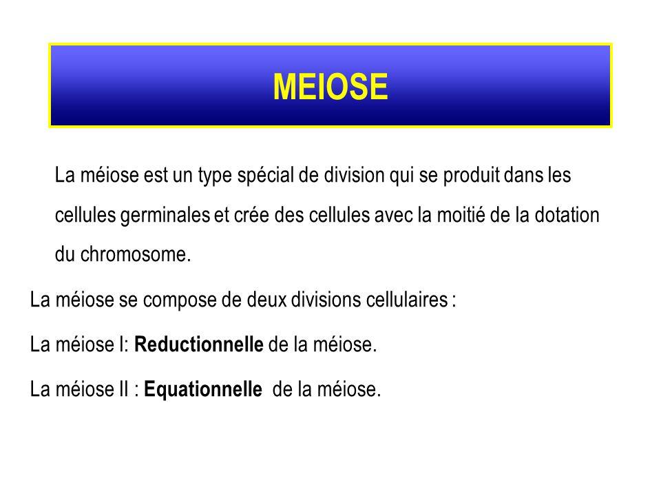La méiose est un type spécial de division qui se produit dans les cellules germinales et crée des cellules avec la moitié de la dotation du chromosome