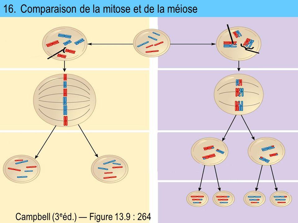 16. Comparaison de la mitose et de la méiose Campbell (3 e éd.) Figure 13.9 : 264