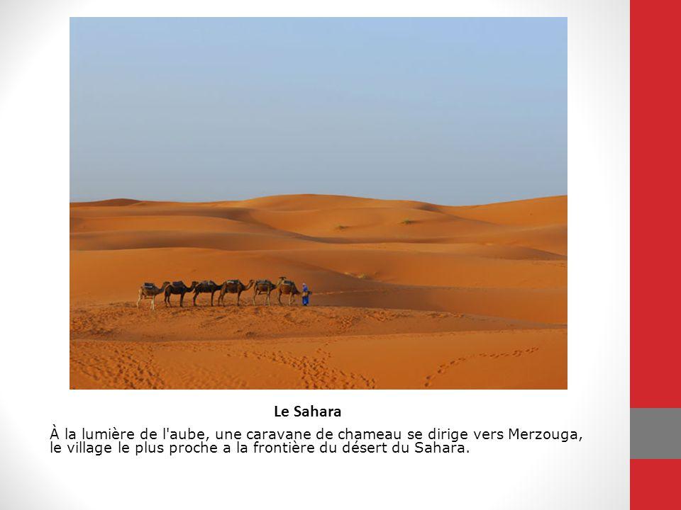 Le Sahara À la lumière de l'aube, une caravane de chameau se dirige vers Merzouga, le village le plus proche a la frontière du désert du Sahara.