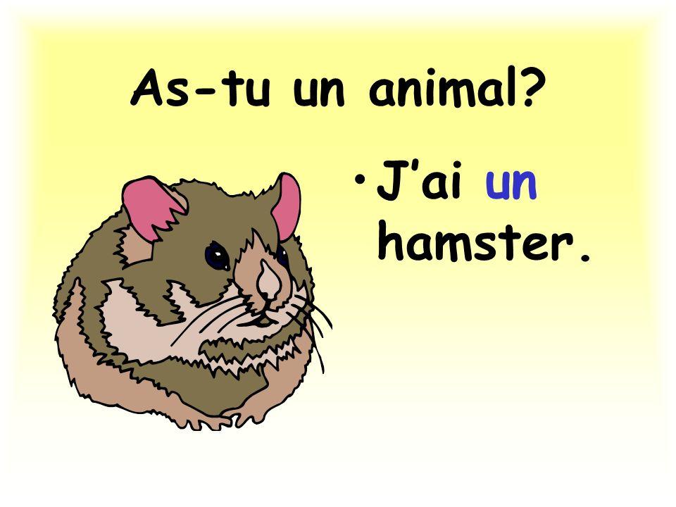 As-tu un animal? Jai un hamster.