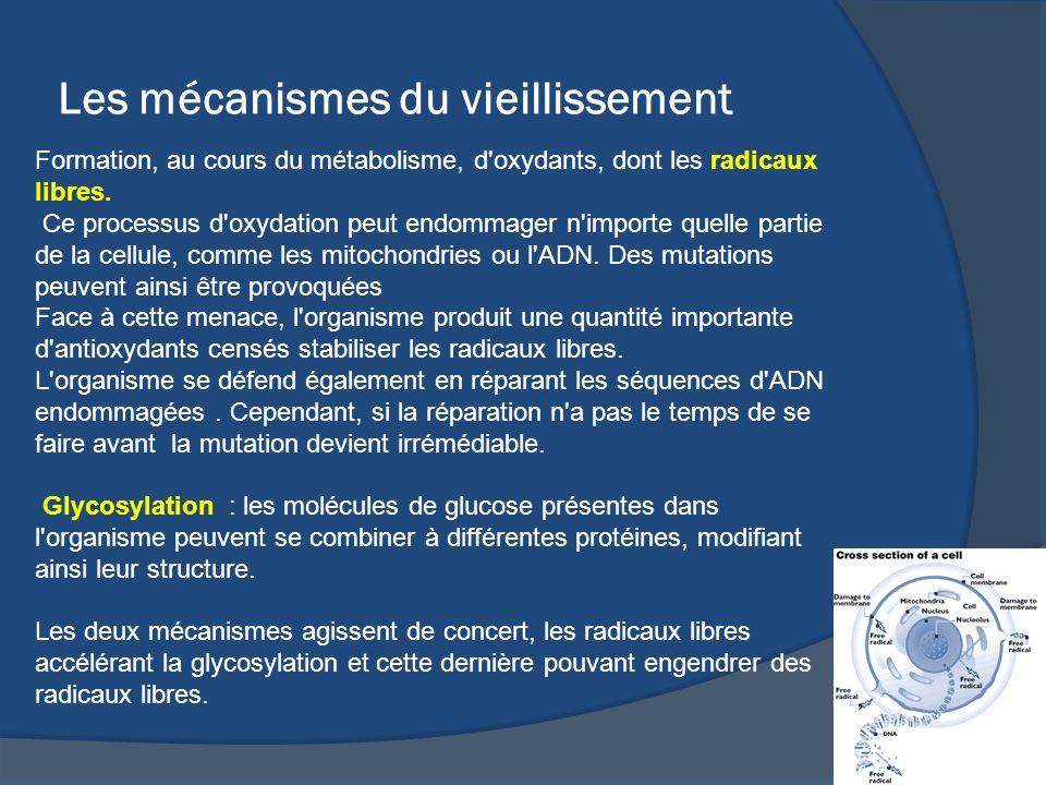 Les mécanismes du vieillissement Formation, au cours du métabolisme, d'oxydants, dont les radicaux libres. Ce processus d'oxydation peut endommager n'