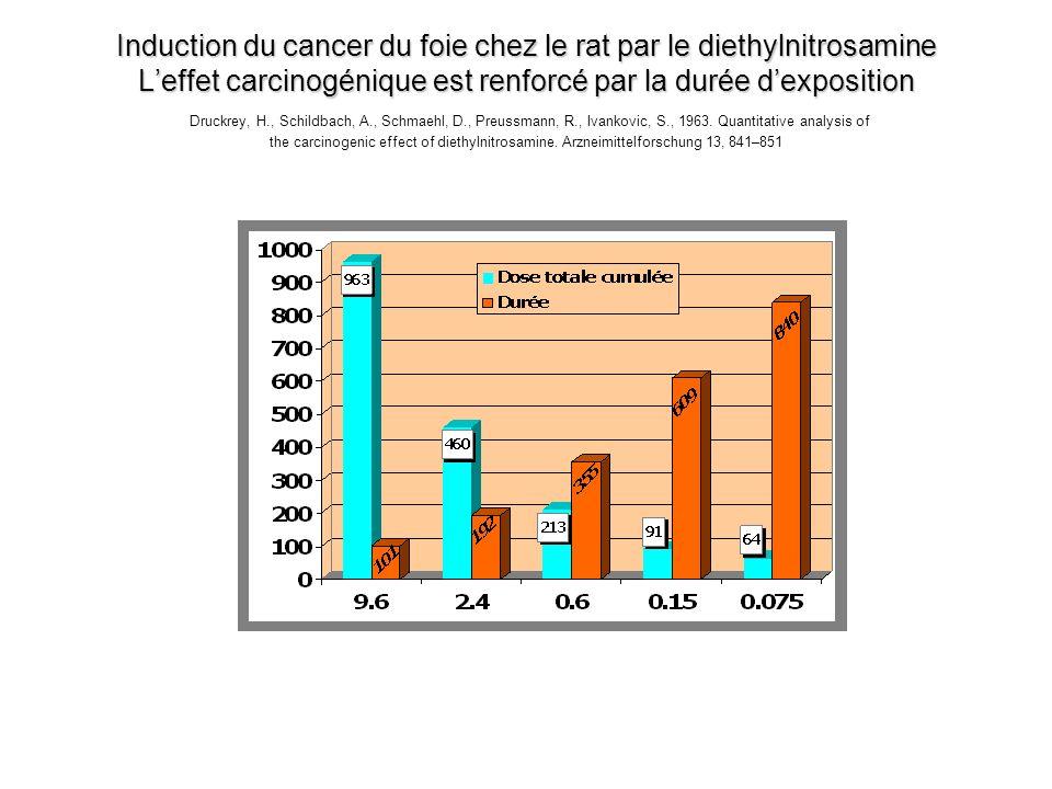 Induction du cancer du foie chez le rat par le diethylnitrosamine Leffet carcinogénique est renforcé par la durée dexposition Induction du cancer du f