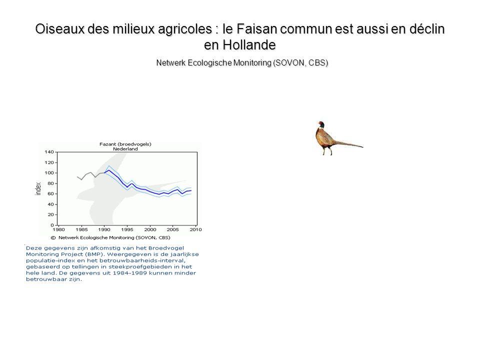 Oiseaux des milieux agricoles : le Faisan commun est aussi en déclin en Hollande Netwerk Ecologische Monitoring (SOVON, CBS)