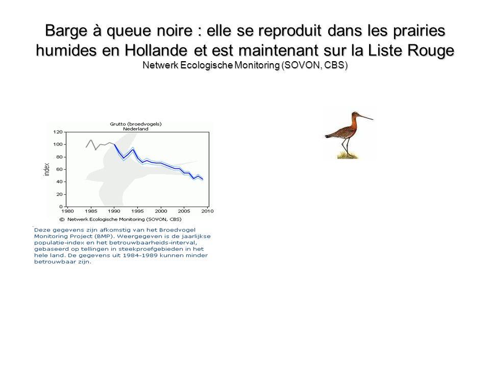 Barge à queue noire : elle se reproduit dans les prairies humides en Hollande et est maintenant sur la Liste Rouge Netwerk Ecologische Monitoring (SOV