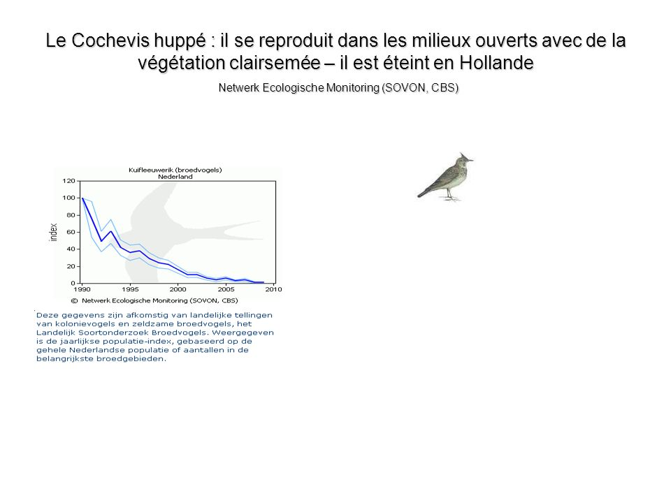 Le Cochevis huppé : il se reproduit dans les milieux ouverts avec de la végétation clairsemée – il est éteint en Hollande Netwerk Ecologische Monitori