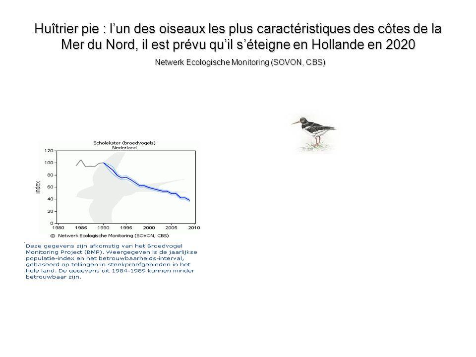 Huîtrier pie : lun des oiseaux les plus caractéristiques des côtes de la Mer du Nord, il est prévu quil séteigne en Hollande en 2020 Netwerk Ecologisc