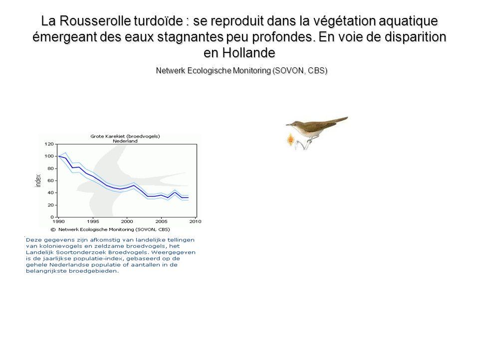 La Rousserolle turdoïde : se reproduit dans la végétation aquatique émergeant des eaux stagnantes peu profondes. En voie de disparition en Hollande Ne
