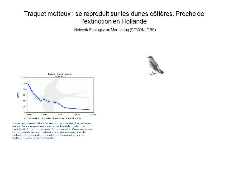Traquet motteux : se reproduit sur les dunes côtières. Proche de lextinction en Hollande Netwerk Ecologische Monitoring (SOVON, CBS)