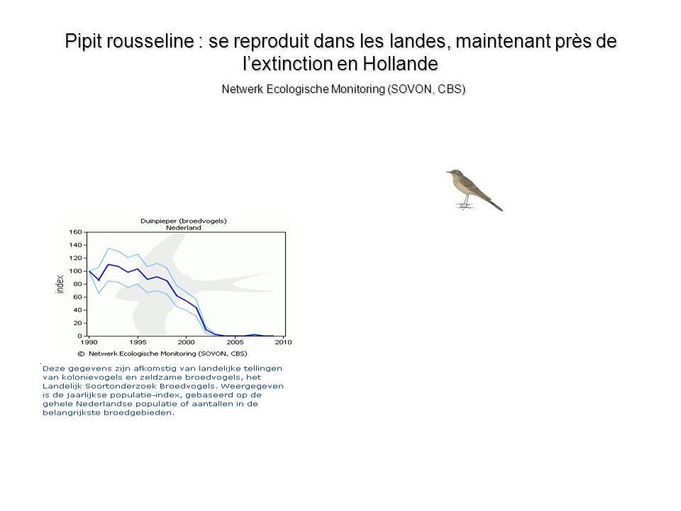 Pipit rousseline : se reproduit dans les landes, maintenant près de lextinction en Hollande Netwerk Ecologische Monitoring (SOVON, CBS)
