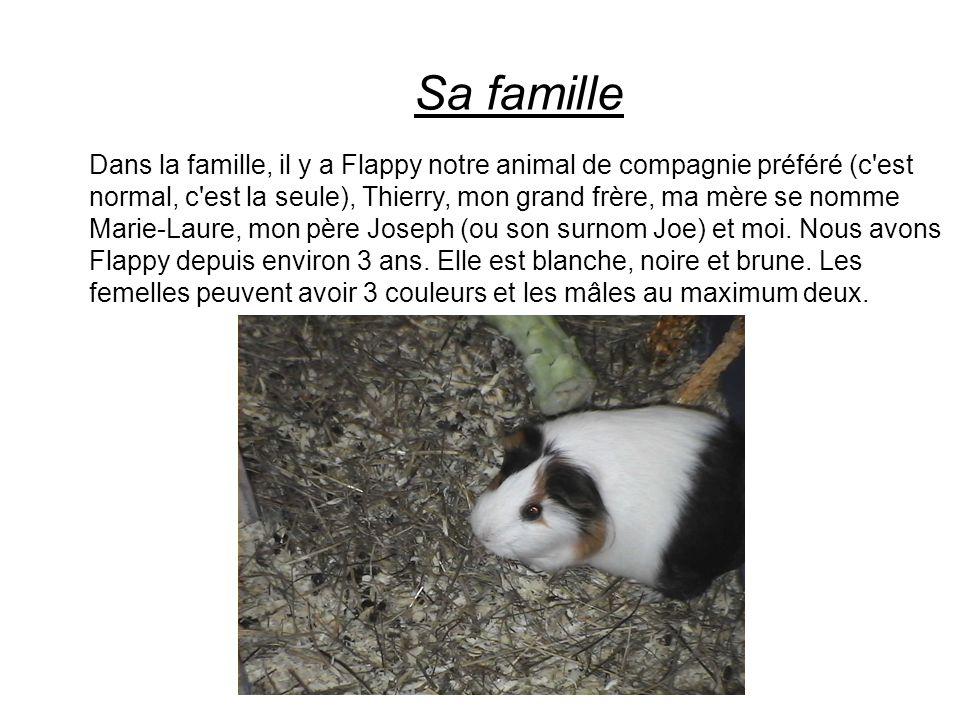 Sa famille Dans la famille, il y a Flappy notre animal de compagnie préféré (c'est normal, c'est la seule), Thierry, mon grand frère, ma mère se nomme