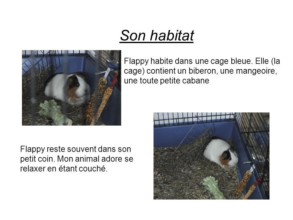 Son habitat Flappy habite dans une cage bleue. Elle (la cage) contient un biberon, une mangeoire, une toute petite cabane Flappy reste souvent dans so